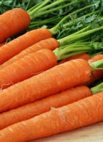 Морковь Тина F1 100 000 сем. Agri.