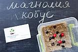 Магнолия кобус семена 10 шт (Magnolia kobus) для саженцев насіння магнолія на саджанці, фото 3