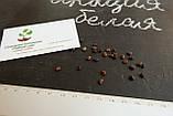 Акация белая семена(20шт), фото 2