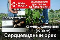 Сердцевидный орех саженцы (саджанці серцевидний горіх) с открытой корневой системой (на осень 2020)