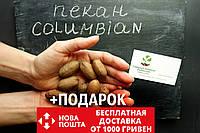 """Пекан (10 штук) сорт """"Columbian""""  (поздний) семена орех кария для выращивания саженцев (насіння на саджанці), фото 1"""