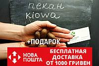 """Пекан (10 штук) сорт """"Kiowa"""" (ранний) семена орех кария для саженцев (насіння на саджанці) Carya illinoinensis, фото 1"""