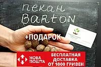 """Пекан (10 штук) сорт """"Barton""""(ранний)семена орех кария для саженцев (насіння на саджанці) Carya illinoinensis"""