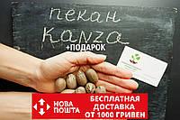 """Пекан (10 штук) сорта """"Kanza""""(поздний) семена орех кария для саженцев (насіння на саджанці)Carya illinoinensis, фото 1"""