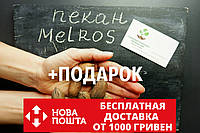 """Пекан (10 штук) сорт """"Melros"""" (ранний) семена орех кария для саженцев (насіння на саджанці)Carya illinoinensis"""