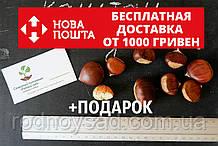 Семена каштан съедобный (3-8 грамм) 10 штук Castánea satíva посевной, орехи для саженцев + инструкции