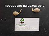 Гинкго билоба семена 10 шт (гинко, гинго) для саженцев Ginkgo biloba + инструкции + подарок, фото 2