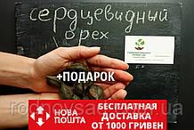 Орех сердцевидный семена (10шт) Juglans cordiformis для саженцев + инструкция + подарок