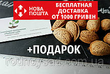 Миндаль сладкий бумажно-скарлупный семена (10шт) косточка для саженцев + инструкции + подарок