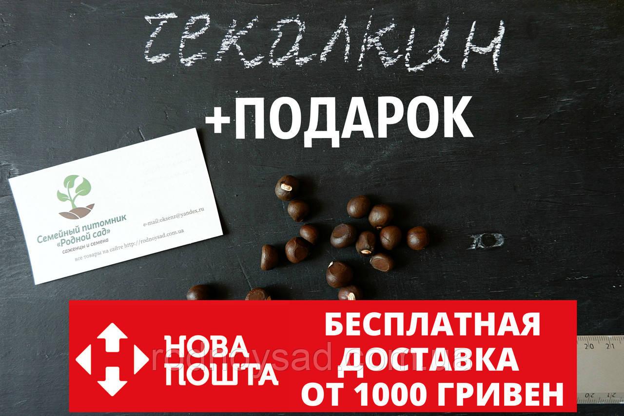 Чекалкин орех (Ксантоцерас) семена (10 штук) для выращивания саженцев (насіння на саджанці) + инструкция - фото 1