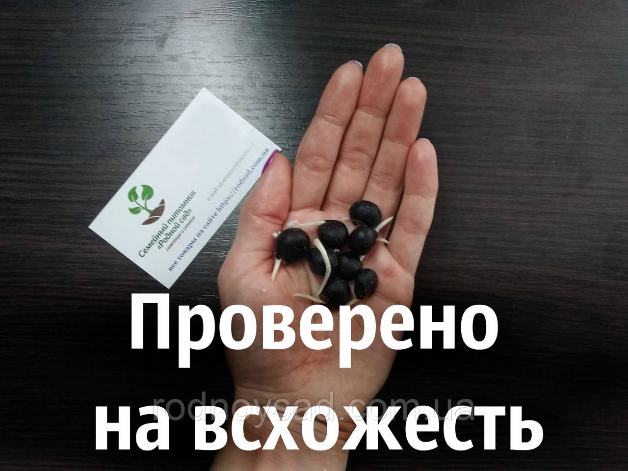 Чекалкин орех (Ксантоцерас) семена (10 штук) для выращивания саженцев (насіння на саджанці) + инструкция - фото 2
