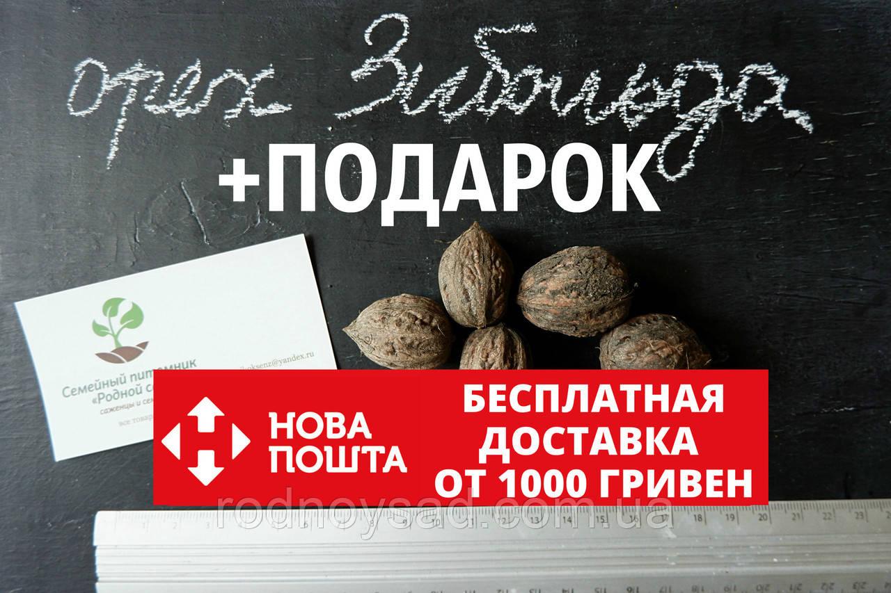 Орех Зибольда семена (10 штук) орех айлантолистный для саженцев, Júglans ailanthifolia+ инстрцукция + подарок