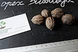 Орех Зибольда семена (10 штук) орех айлантолистный для саженцев, Júglans ailanthifolia+ инстрцукция + подарок, фото 2