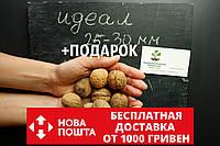 """Семена грецкий орех сорт """"Идеал"""" (10 штук калибр 25-30 мм) на саженцы, насіння волоський горіх на саджанці, фото 1"""
