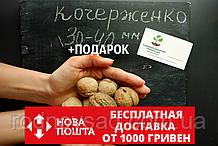 """Семена грецкий орех сорт """"Кочерженко""""(10 штук калибр 30-40 мм) на саженцы + инструкции + подарок"""