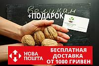 """Грецкий орех """"Великан"""" семена (10 шт) калибр 35-50мм на саженцы волоський горіх """"Велетень"""" насіння на саджанці"""