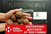 """Орех грецкий """"Песчанский"""" семена 10 шт для саженцев насіння волоський горіх на саджанці, фото 1"""