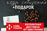 Кедр сибирский семена (20 штук) (сосна кедровая) для выращивания саженцев + инструкции + подарок, фото 2