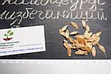 Калоцедрус низбегающий семена (20 шт) (Calocedrus decurrens) для выращивания саженцев + подарок, фото 2