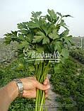 Семена петрушки Новас, 100 грамм, фото 4