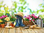 Удобрения для цветов и хвойных