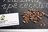 Пихта греческая семена (50 шт) (пихта кефалиниийская, Ábies cephalónica) для выращивания саженцев + подарок, фото 2