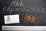 Ель европейская семена (50 шт) (ель обыкновенная, смерека, Pícea ábies) для выращивания саженцев + подарок, фото 4