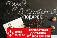 Туя восточная семена (20шт) (плосковеточник, биота, Platýcladus) семечки для саженцев насіння для саджанців