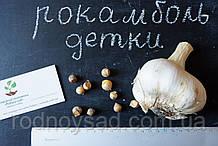 Рокамболь испанский семена (детки) (20 штук) (слоновий чеснок) гигантский лук-чеснок