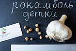 Рокамболь испанский зубки 10-30 грамм(10 штук) (слоновий чеснок семена) гигантский лук-чеснок, насіння часнику, фото 2