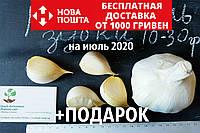 Рокамболь испанский зубки 10-30 грамм(10 штук) (слоновий чеснок семена) гигантский лук-чеснок, насіння часнику, фото 1