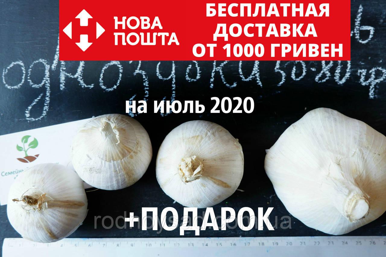 Рокамболь испанский однозубки 50-80 грамм(10 штук) (слоновий чеснок семена) лук-чеснок, насіння часнику