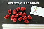 Зизифус саженцы (унаби, ююба, китайский финик, Zízíphus jujúba) зізіфус саджанці, фото 5