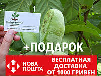 Азимина семена Asimina triloba (10шт) косточки, семечки для саженцев (мексиканский банан)насіння
