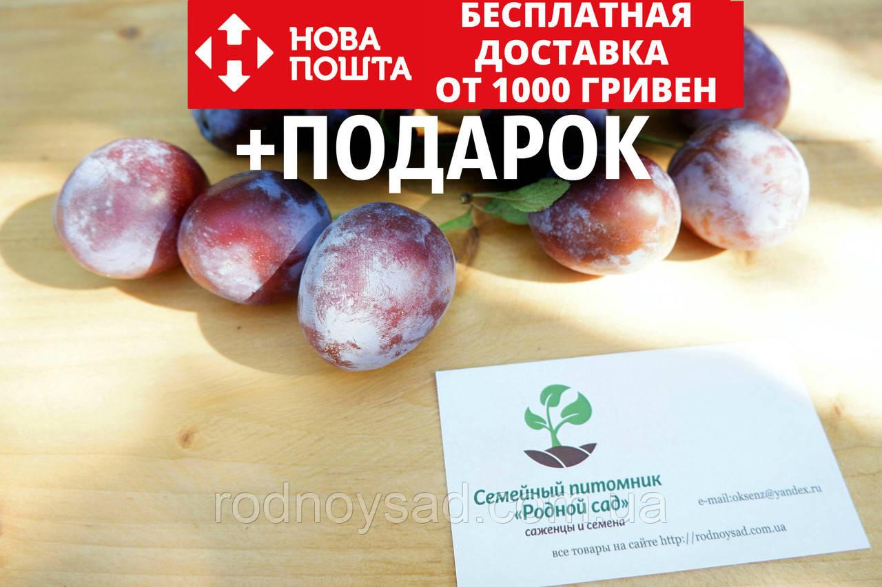 """Слива """"Чернослив"""" семена (20шт) косточка, семечка для выращивания саженцев насіння  для саджанців + инструкция"""