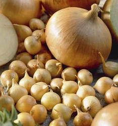 Семена лука-севок