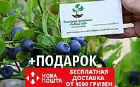 Черника обыкновенная семена (20 штук) для саженцев чорниця насіння на саджанці Vaccínium myrtíllus + подарок, фото 1