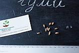 Гуми (лох многоцветковый) семена (10 штук) Elaeagnus multiflora для саженцев насіння на саджанці + подарок, фото 4