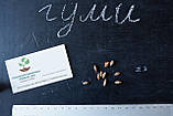 Гуми (лох многоцветковый) семена (10 штук) Elaeagnus multiflora для саженцев насіння на саджанці + подарок, фото 2