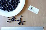 Ирга семена (20 штук) для выращивания саженцев (насіння на саджанці) + инструкция, фото 2