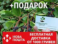 Ирга семена (20 штук) для выращивания саженцев (насіння на саджанці) + инструкция, фото 1