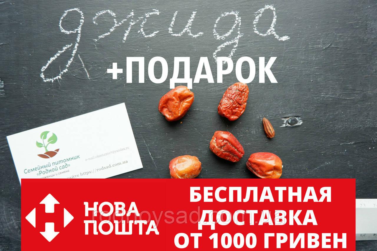 Семена Джиды бухарской (10 штук) для саженцев, финик морозостойкий лох узколистный, Elaeágnus angustifólia