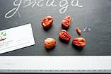 Семена Джиды бухарской (10 штук) для саженцев, финик морозостойкий лох узколистный, Elaeágnus angustifólia, фото 2