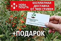 Ягода годжи семена (20 штук) (дереза обыкновенная) Lýcium bárbarum для саженцев, насіння годжі на саджанці, фото 1