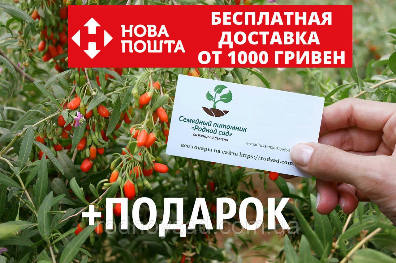 Ягода годжи семена (20 штук) (дереза обыкновенная) Lýcium bárbarum для саженцев, насіння годжі на саджанці