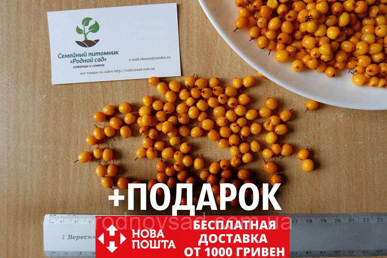 Облепиха (сентябрьская) семена (20 штук) для саженцев обліпиха насіння на саджанці Hippóphaë rhamnóides