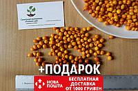 Облепиха (сентябрьская) семена (20 штук) для саженцев обліпиха насіння на саджанці Hippóphaë rhamnóides, фото 1