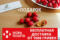 Боярышник семена (20 шт) (насіння глоду для саджанців)семечка, косточка для выращивания саженцев, фото 1