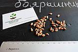 Боярышник семена (20 шт), фото 2