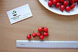 Боярышник семена (20 шт), фото 3